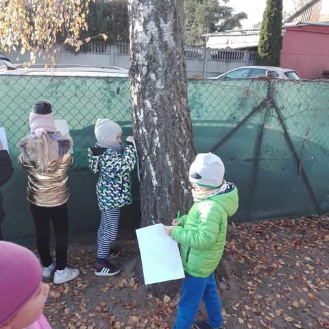Inwentaryzacja drzew przez Sportowców
